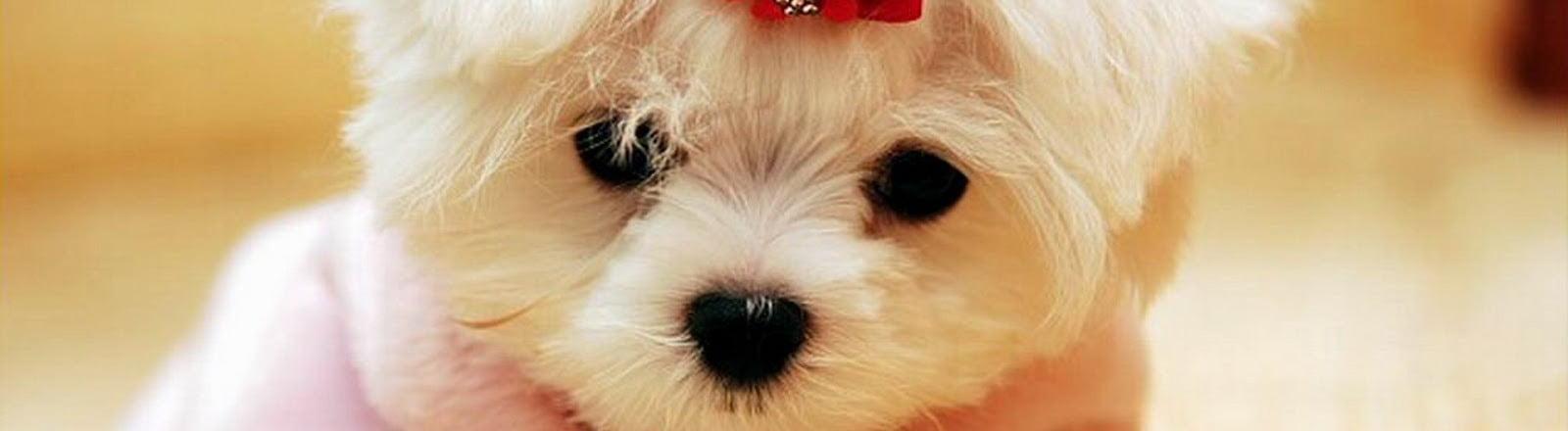 peluquería canina clinica veterinaria alcazaba