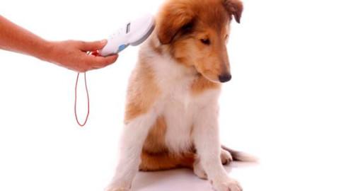 vacunas perros precio granada microchip-mascotas
