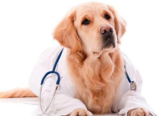 perro-veterinario