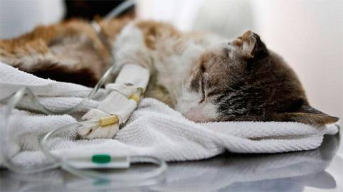 vacunas cachorros gato granada