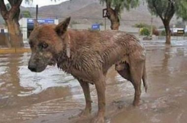 evacuacion de mascotas