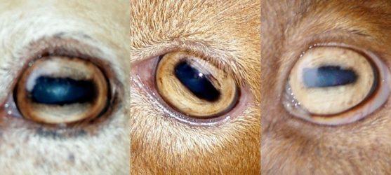 curiosidades ojos de los animales clinica veterinaria alcazaba Granada