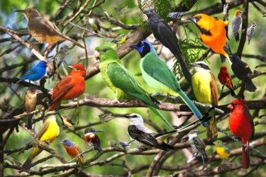 aves y sus plumas