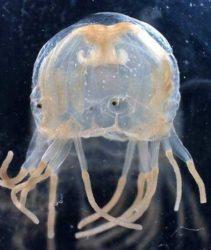 medusas clinica veterinaria granada alcazaba