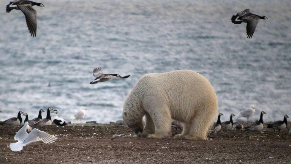 cambio climático y animales