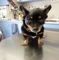 perro con cáncer veterinario granada