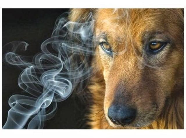 tabaco y mascotas veterinario granada