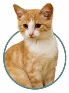 gato veterinario gatos granada