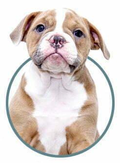perro veterinario perros granada