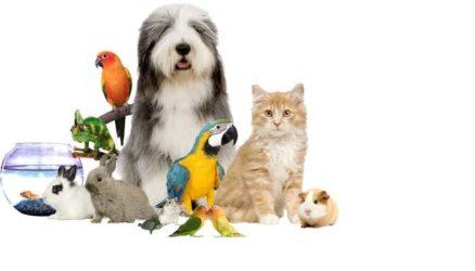 mascotas preferidas en España