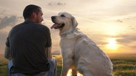 terapias con perros Granada