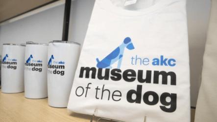 museo del perro clínica veterinaria granada