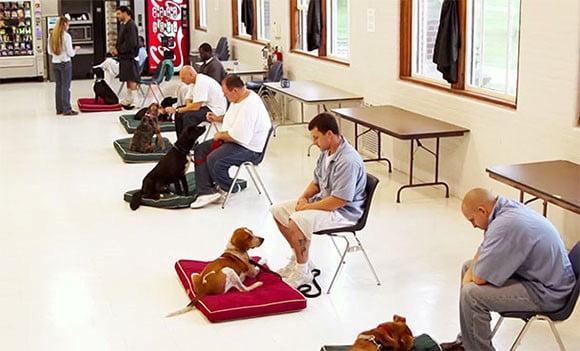 Cuidar de un perro como terapia para presos granada