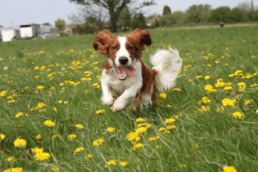 cómo superar la muerte de mi perro