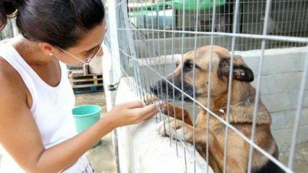 Contrato de adopción de un perro