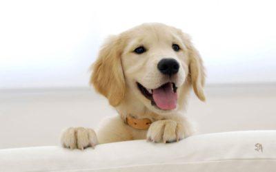 tratamiento sarna en perros