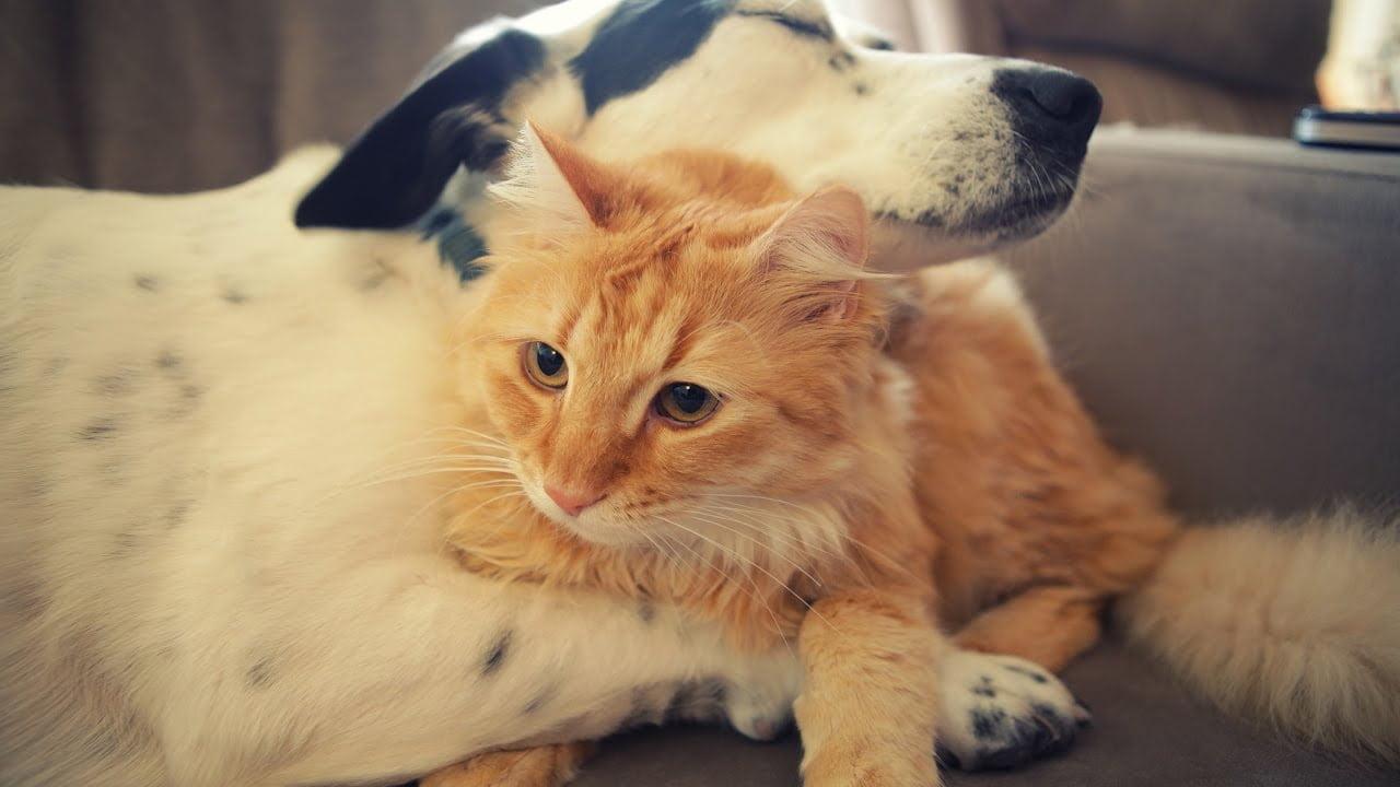 eutanasia-en-perros