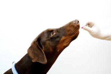 Medicamentos Humanos para Mascotas Todo un Peligro