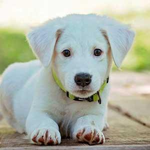 precio-plan-descuento-cachorrito, veterinario granada