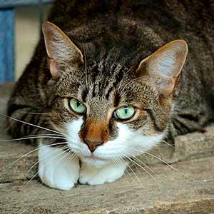 precio-plan-descuento-gato-adulto, veterinario-granada