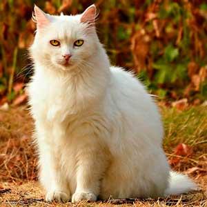 precio-plan-descuento-gato-senior, clinica-veterinaria-alcazaba