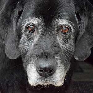 precio-plan-descuento-perro-senior, clinica veterinaria granada
