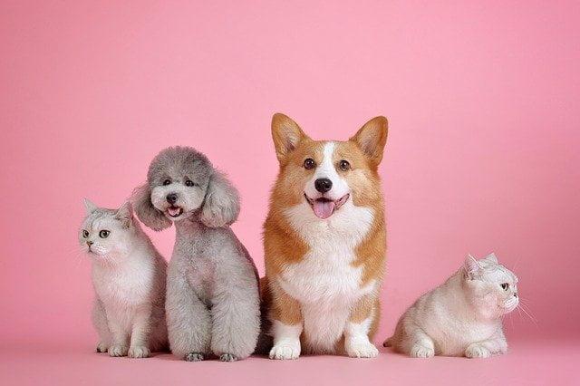 recomendaciones-frente-al-coronavirus-mascotas