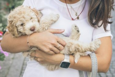 como-llevar-a-un-perro-al-veterinario