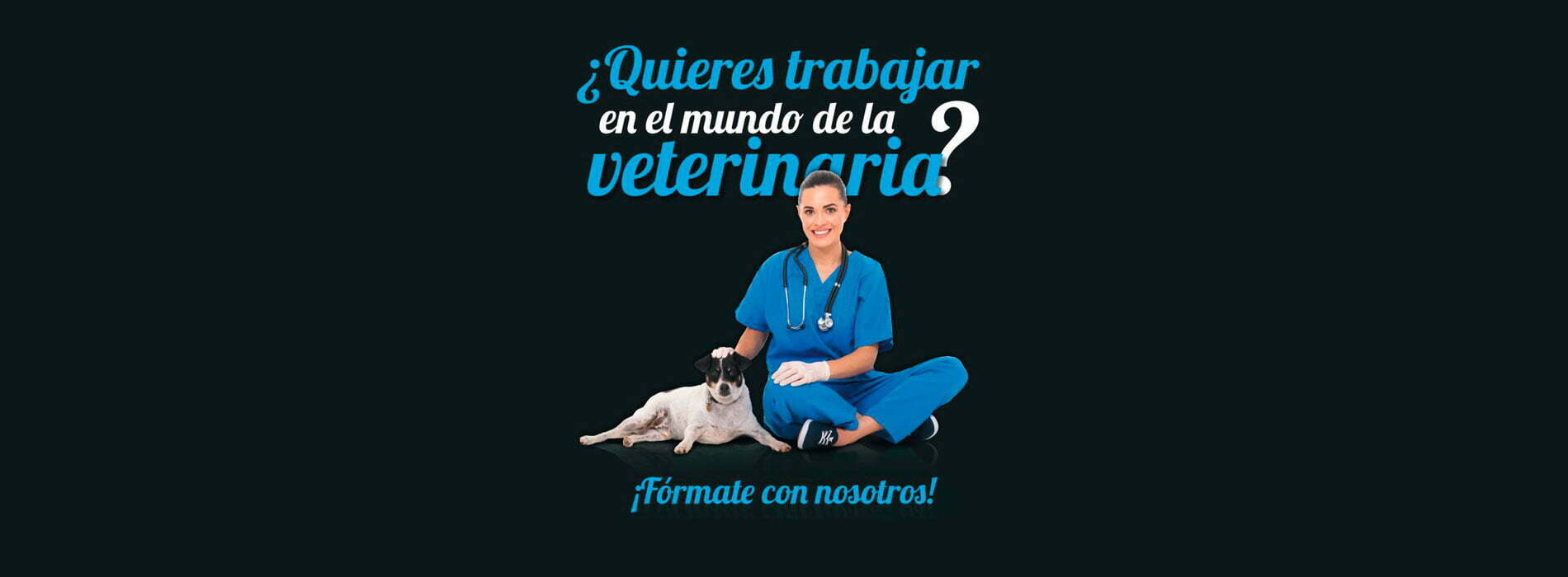curso-asistente-clinico-veterinario