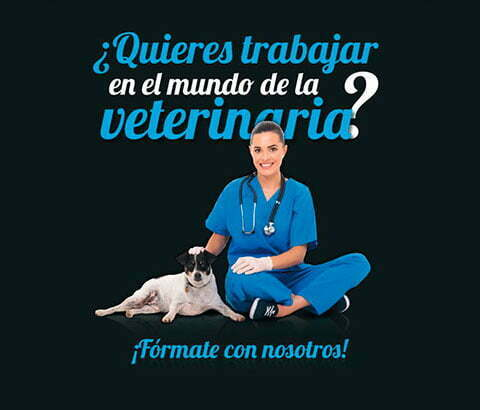 movil-curso-asistente-clinico-veterinario