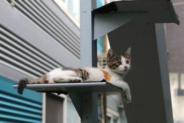 dia-internacional-animal-sin-hogar