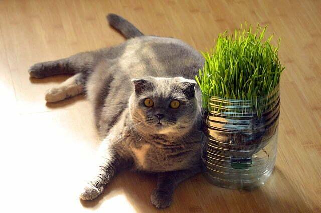 cantidad-comida-gato-diaria