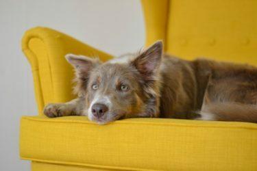 como-curar-herida-a-un-perro