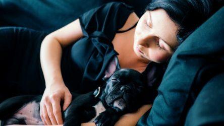 cuidar-perros-en-casa