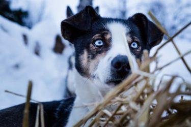 Cuidado perros en invierno