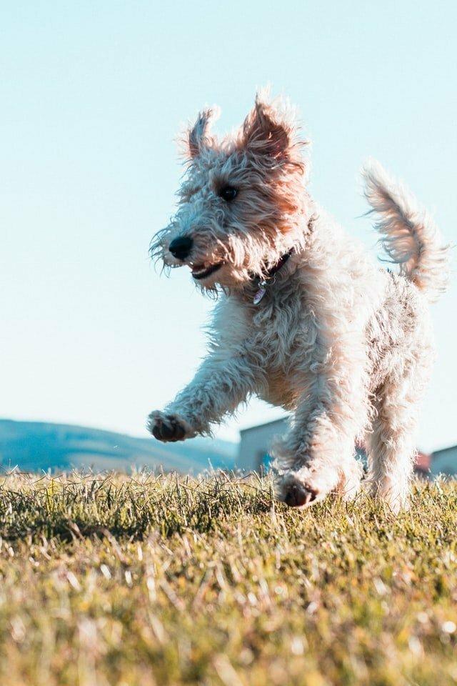 perro feliz y el lenguaje canino