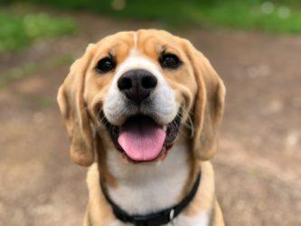 Cómo saber si un perro sufre maltrato