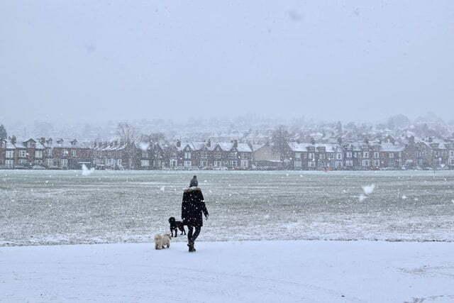 cuidados-del-perro-en-invierno