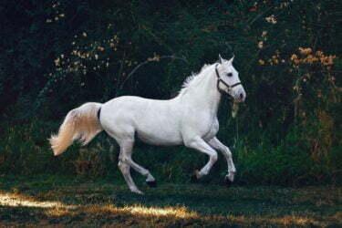 Examen compraventa de caballos