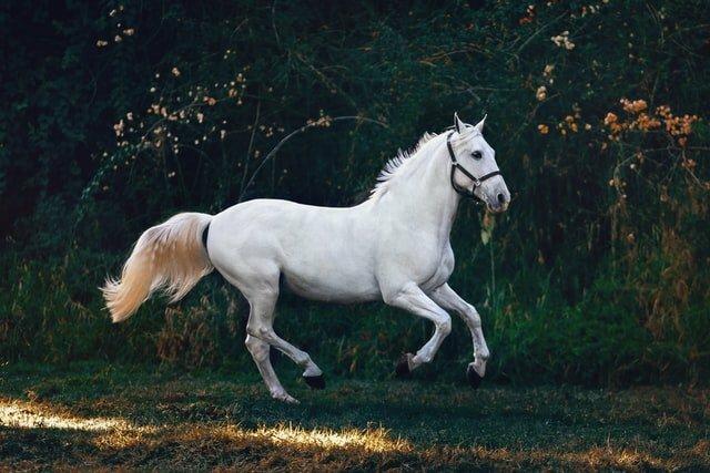 examen-compraventa-caballos