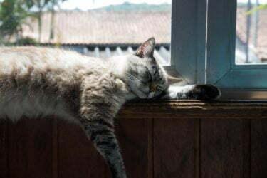 golpe-de-calor-gatos
