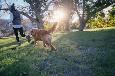 peligros-verano-perros
