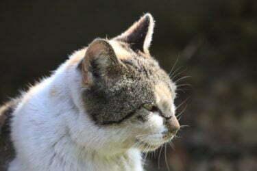 cuidado-de-gatos-mayores
