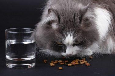 dieta-barf-gatos