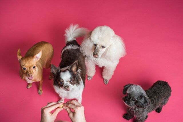 soplo-corazon-perros